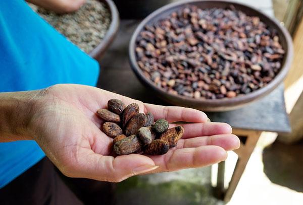 Cacaobonen voor eerlijke chocolade