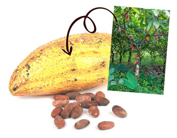 cacao-chocolade-chocstar-cadeaus-productie