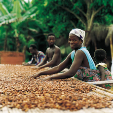 cacaooogst_bron_foto_callebaut_6